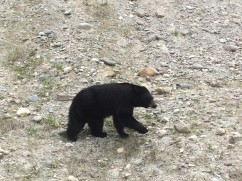 Bear at the entrance to the Parkway
