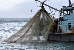 Fishing in the South China Sea