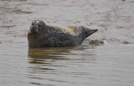 Burnham common seal 07
