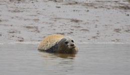 Burnham common seal 08