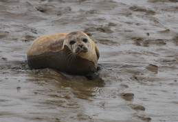 Burnham common seal 10