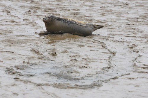 Burnham common seal 12