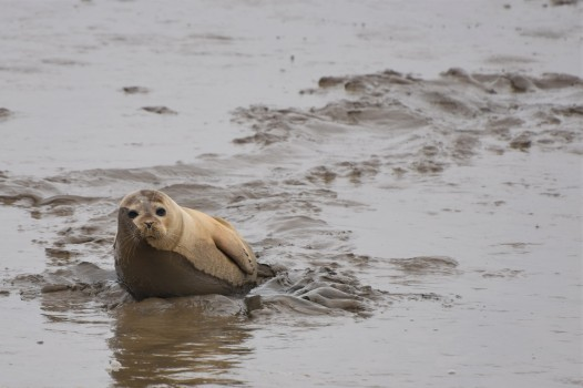Burnham common seal 13