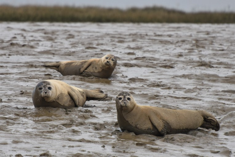 Burnham common seals 11