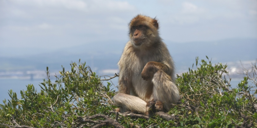 Gibraltar – the Rock and monkeys
