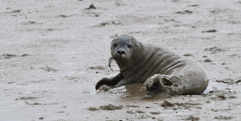 Back to Burnham – Will there be seal pups?