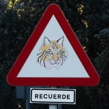These were dotted around the roads in the Sierra de Andujar Natural Park