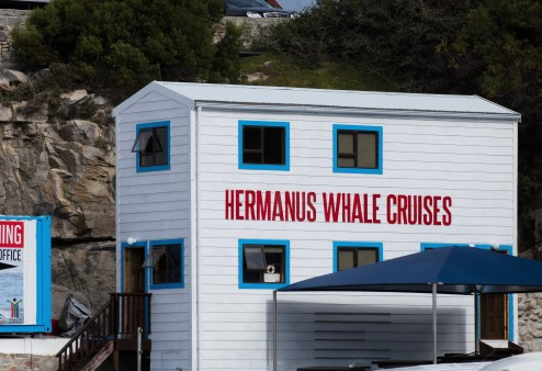 Hermanus Whale Cruises in New Harbour