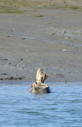 ...relax. Chichester Harbour seal