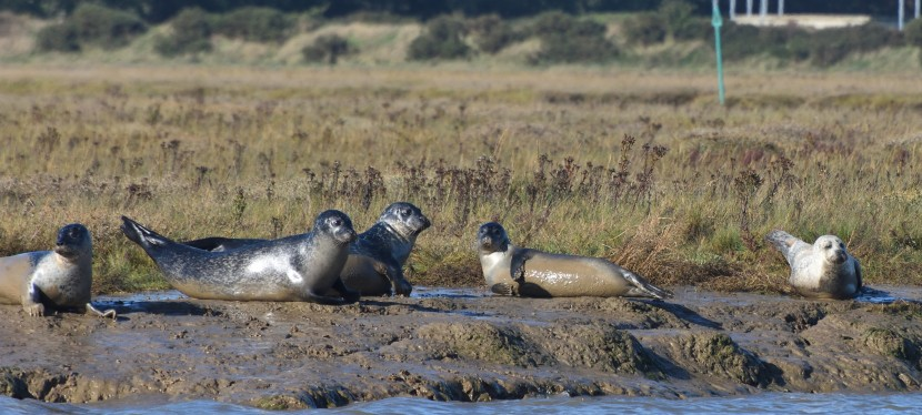 Its seal time again – Harwich / Walton-on-the-Naze